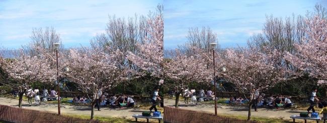 須磨浦公園 西エリア④(交差法)