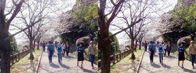 須磨浦公園 西エリア③(平行法)