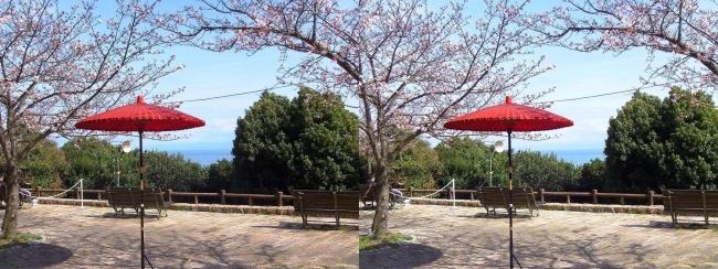 須磨浦公園 西エリア 敦盛野点②(平行法)