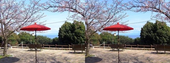須磨浦公園 西エリア 敦盛野点②(交差法)