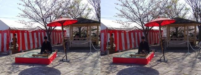 須磨浦公園 西エリア 敦盛野点①(交差法)
