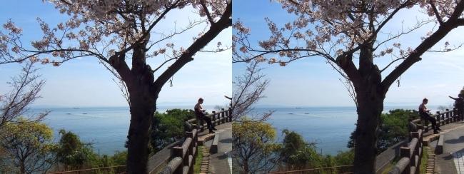 須磨浦公園 西エリア①(交差法)