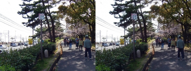 須磨浦公園 東エリア③(交差法)