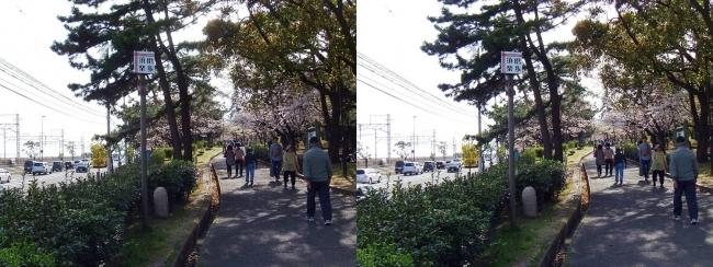 須磨浦公園 東エリア③(平行法)