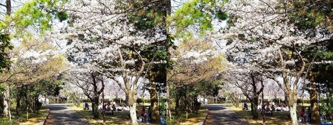 須磨浦公園 東エリア②(交差法)