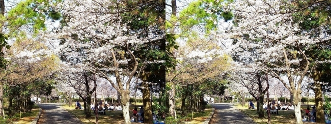須磨浦公園 東エリア②(平行法)
