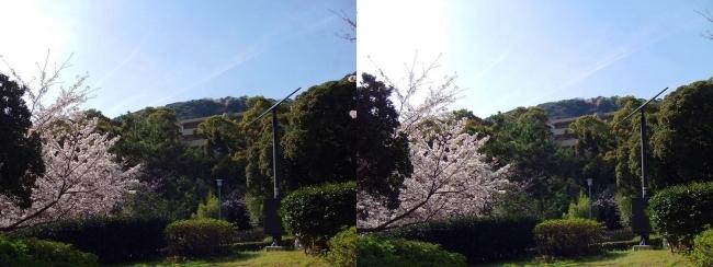 須磨浦公園 東エリア①(平行法)