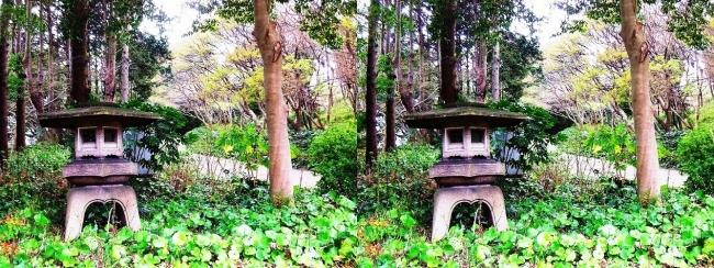 須磨離宮公園 植物園 東門への道(平行法)