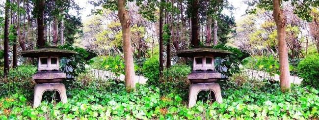 須磨離宮公園 植物園 東門への道(交差法)