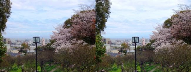 須磨離宮公園 植物園 梅園③(平行法)