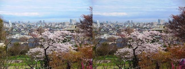 須磨離宮公園 植物園 梅園②(交差法)