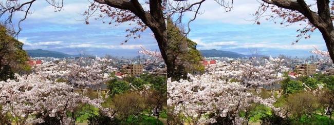 須磨離宮公園 植物園 梅園①(平行法)