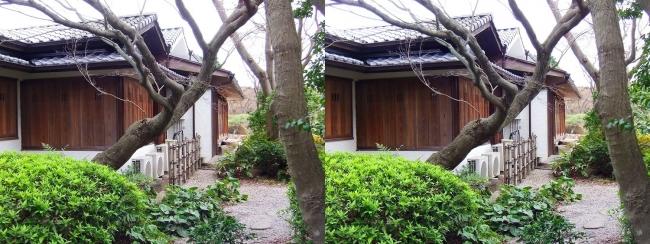 須磨離宮公園 植物園 和庭園⑤(平行法)