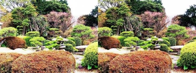 須磨離宮公園 植物園 和庭園②(交差法)