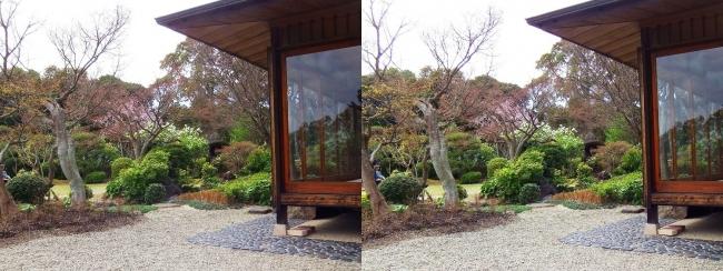 須磨離宮公園 植物園 和庭園①(平行法)