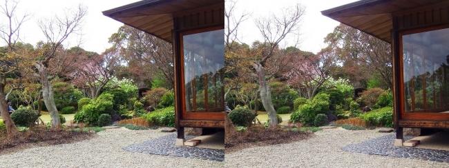 須磨離宮公園 植物園 和庭園①(交差法)