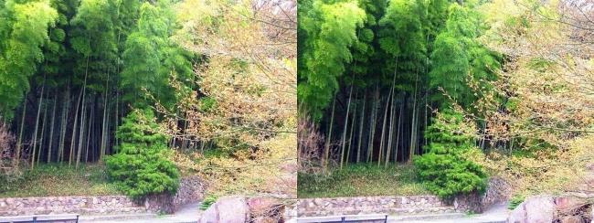 須磨離宮公園 植物園 竹林(平行法)