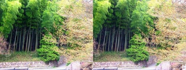 須磨離宮公園 植物園 竹林(交差法)