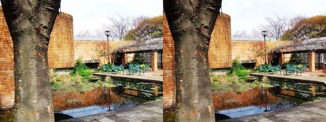 須磨離宮公園 植物園 鑑賞温室⑥(交差法)