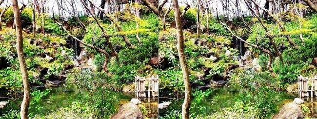 須磨離宮公園 植物園 もみじ滝(平行法)