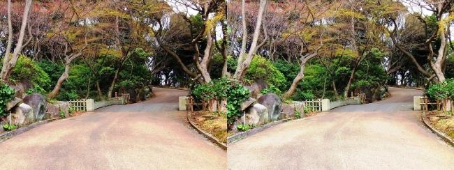 須磨離宮公園 植物園②(平行法)