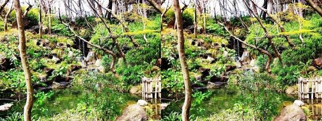 須磨離宮公園 植物園 もみじ滝(交差法)