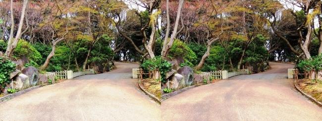 須磨離宮公園 植物園②(交差法)