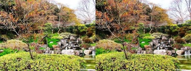 須磨離宮公園 植物園 みどり滝(交差法)