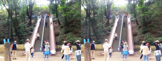須磨離宮公園 児童遊園 ジャンボすべり台(交差法)