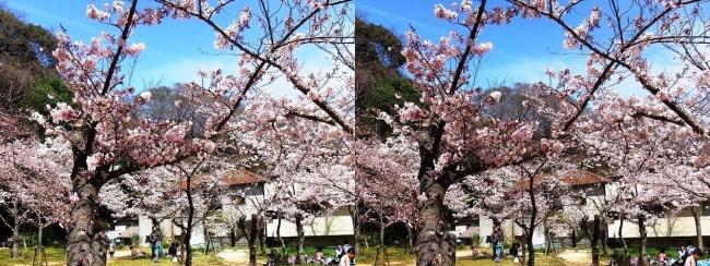 須磨寺公園⑦(交差法)
