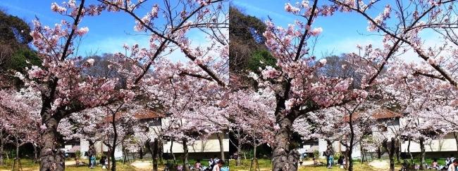須磨寺公園⑦(平行法)