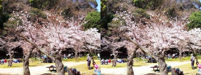 須磨寺公園⑥(平行法)