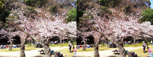 須磨寺公園⑥(交差法)