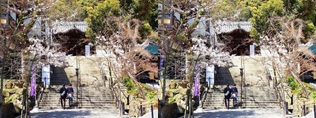 須磨寺 唐門①(平行法)