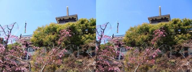 須磨寺 寺務所①(交差法)