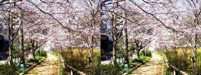 須磨寺公園⑤(平行法)