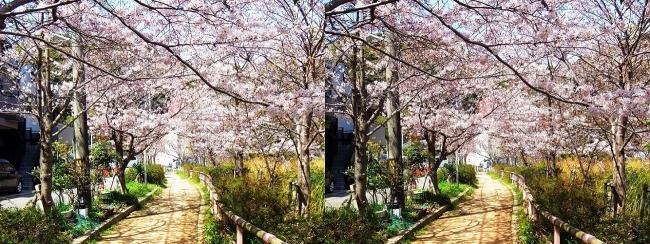 須磨寺公園⑤(交差法)