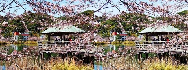 須磨寺公園③(平行法)