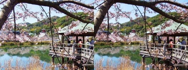 須磨寺公園④(交差法)