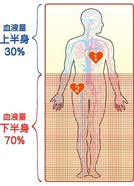 第二の心臓