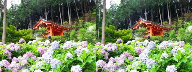 三室戸寺 アジサイ庭園⑪(平行法)