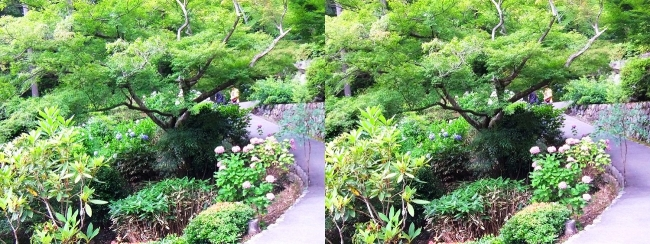 三室戸寺 アジサイ庭園①(交差法)
