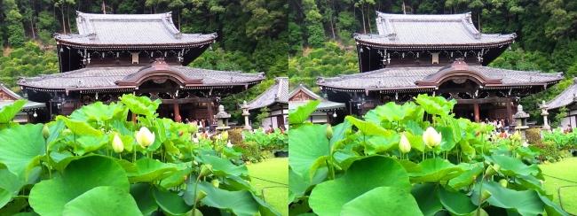 三室戸寺 本堂②(平行法)