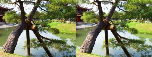 平等院 阿字池 松の木(平行法)