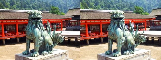 嚴島神社 狛犬 阿形♂(平行法)