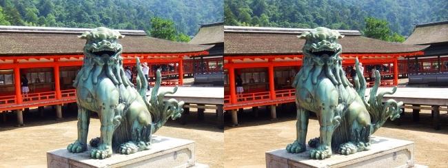 嚴島神社 狛犬 阿形♂(交差法)