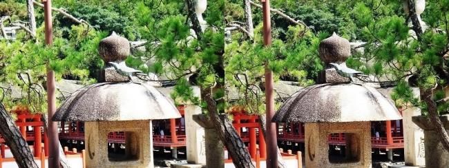 嚴島神社 御嶋廻石灯籠 神烏②(交差法)