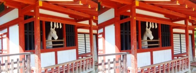 嚴島神社 神馬の馬小屋(交差法)