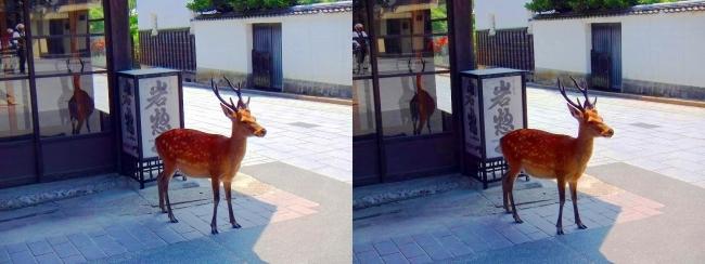 宮島の鹿(交差法)