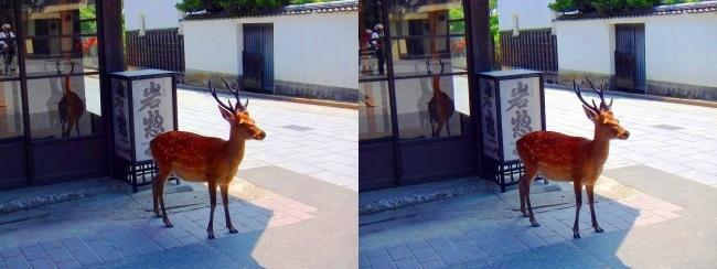 宮島の鹿(平行法)